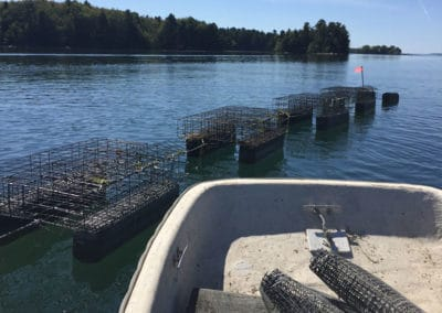 mpoc_img_oyster_cages_795x597
