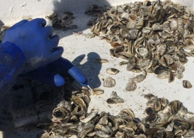 mpoc_img_oyster_sorting_795x597