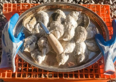 Mere Point Oyster Party Pack: 24 oysters, shucking knife, and gloves