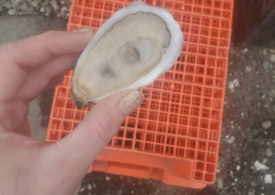 shucked oyster over crates